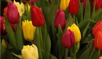 Shop all Flower Bulbs