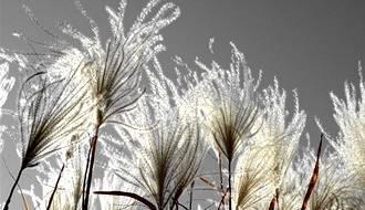Wispy grass plants