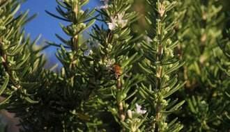 Buy Herbs Online