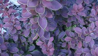Hardy plants for cold, exposed gardens
