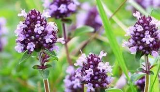 Herb plants for attracting wildlife
