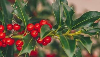 Native hedging plants
