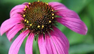 Perennial plants for attracting wildlife