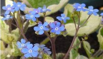 Perennials for alkaline soil