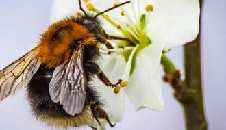 Plants for attracting bees