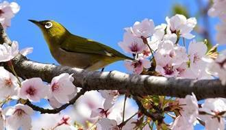 Plants for attracting birds