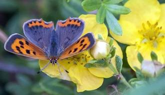 Plants for attracting butterflies