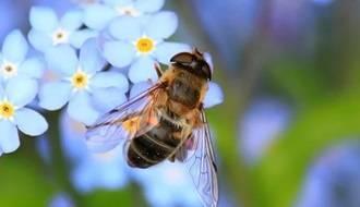 Plants for attracting pollinators