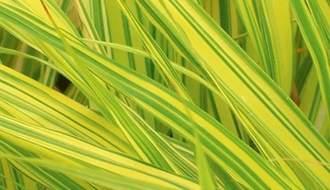 Shop all grass plants