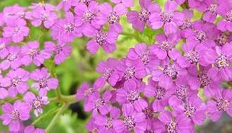 Shop all plants for alkaline soil
