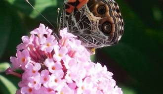 Shrubs for attracting wildlife