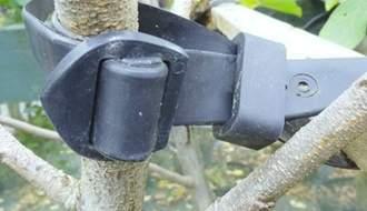 Tree essentials