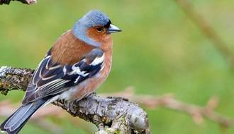 Trees for attracting wildlife