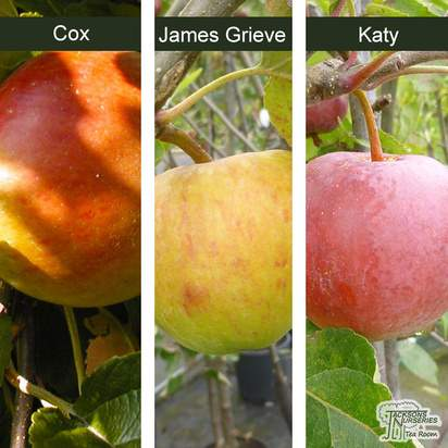 Buy Family Apple Tree online from Jacksons Nurseries