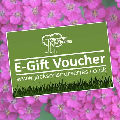 Buy Jacksons Nurseries Gift Voucher online from Jacksons Nurseries.