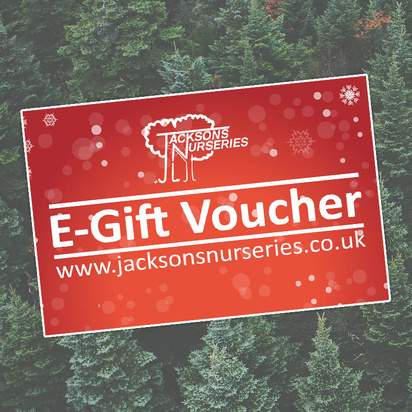 Buy Jacksons Nurseries Gift Voucher online from Jacksons Nurseries.