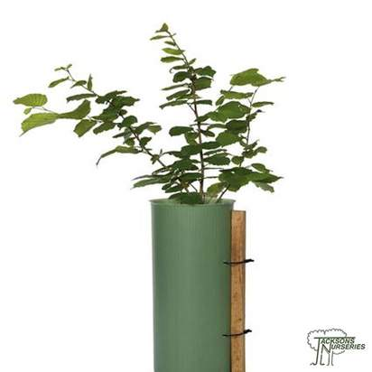 Buy Shrub Shelters online from Jacksons Nurseries.