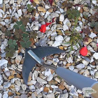 Burgon & Ball Long Handled Weed Slice