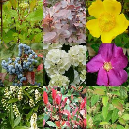 Bare Root Plant pack 10 plants