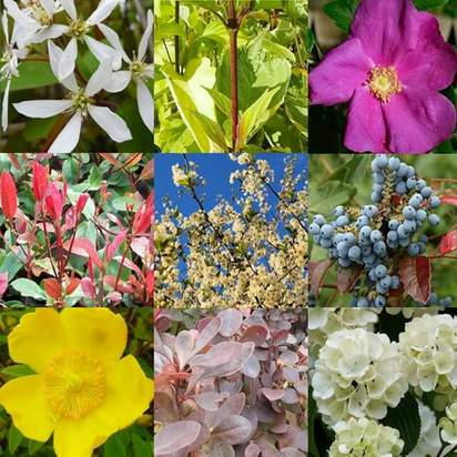 Bare Root Plant pack 20 plants