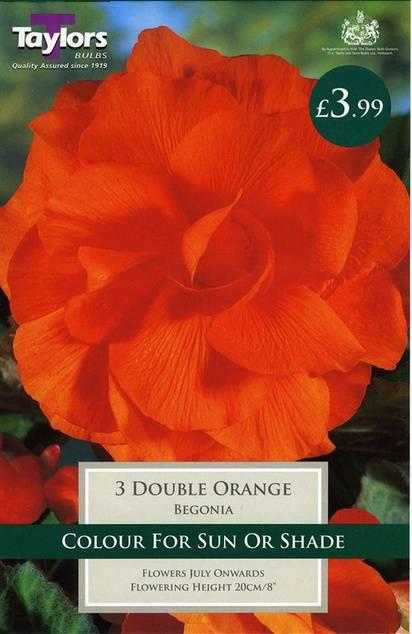 Begonia Double Orange (3 Pack) Taylors Bulbs