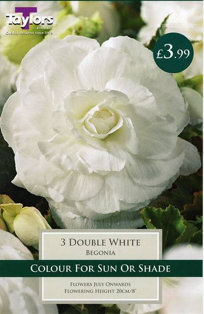 Begonia Double White (3 Pack) Taylors Bulbs