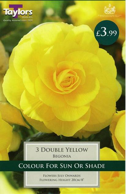 Begonia Double Yellow (3 Pack) Taylors Bulbs