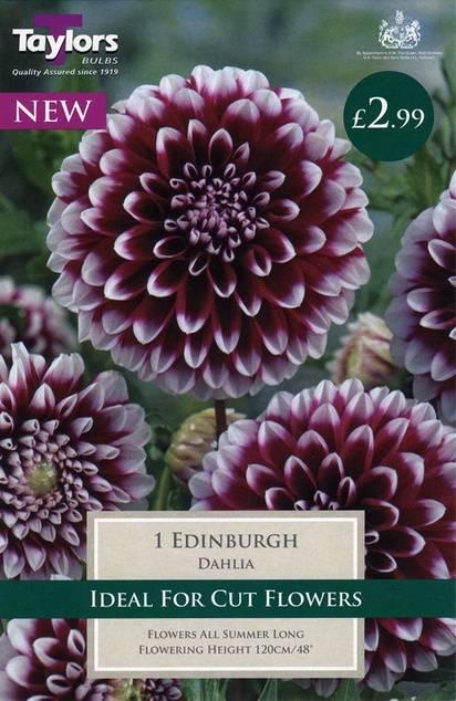 Dahlia Edinburgh (1 Pack) Taylors Bulbs