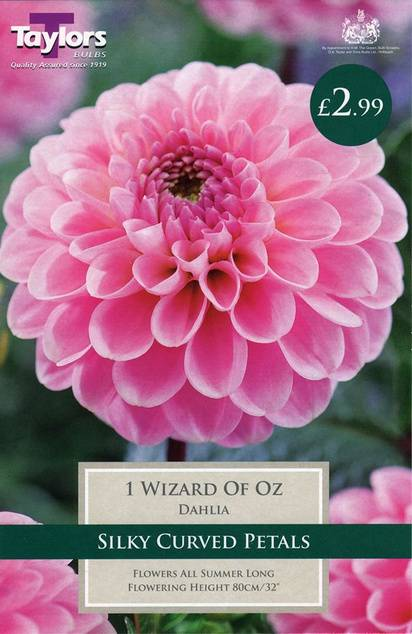 Dahlia Wizard of Oz (1 Pack) Taylors Bulbs