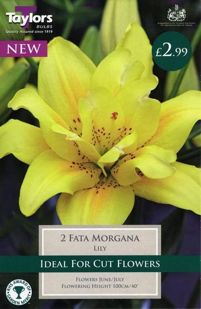 Lily Fata Morgana (2 Pack) Taylors Bulbs