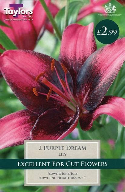Lily Purple Dream (2 Pack) Taylors Bulbs