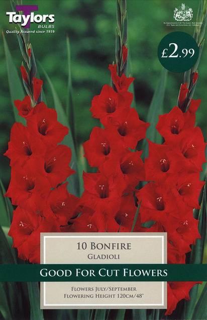 Gladioli Bonfire (10 Pack) Taylors Bulbs