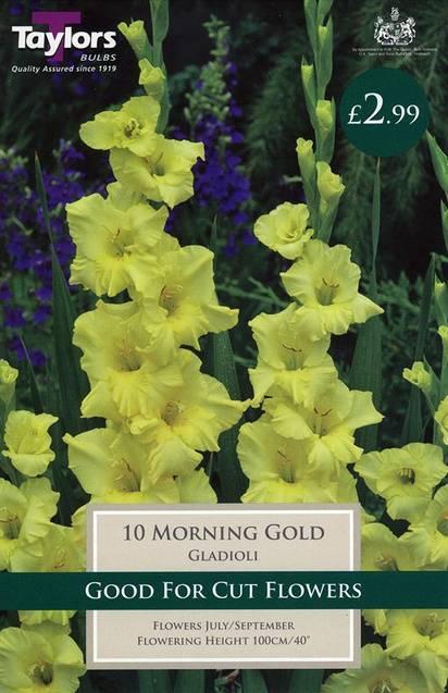 Gladioli Morning Gold (10 Pack) Taylors Bulbs