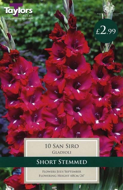 Gladioli San Siro (10 Pack) Taylors Bulbs