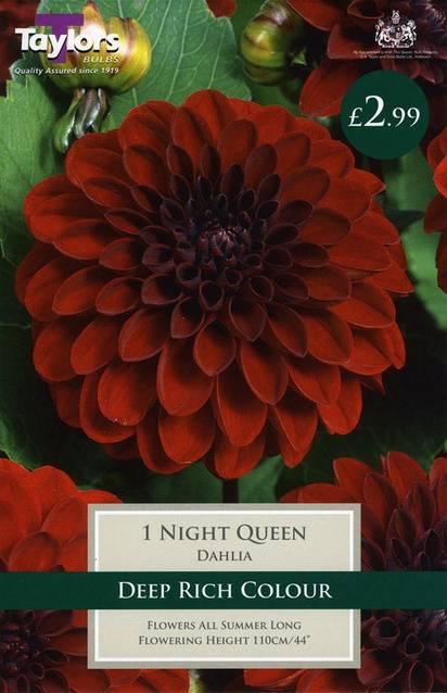 Dahlia Night Queen (1 Pack) Taylors Bulbs