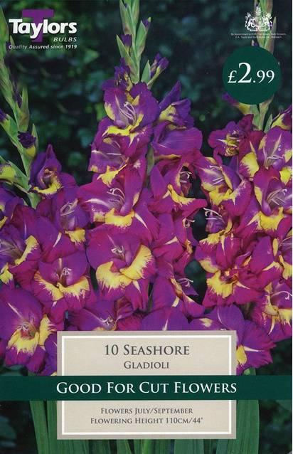 Gladioli Seashore (10 Pack) Taylors Bulbs