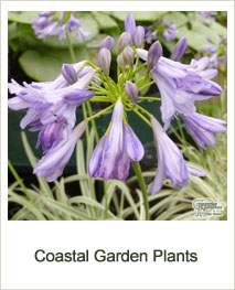 Buy Coastal Garden Plants Online
