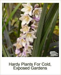 Buy Hardy Plants Suitable For Cold and Exposed Gardens