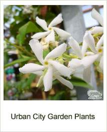 Buy Urban City Garden Plants Online